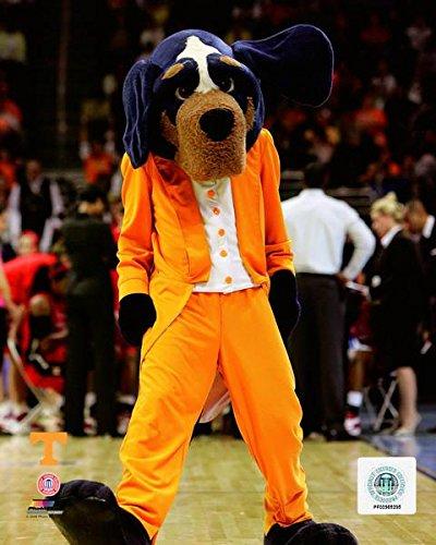 "Smokey Tennessee Volunteers 2007 Mascot Photo (Size: 11"" x 14"")"