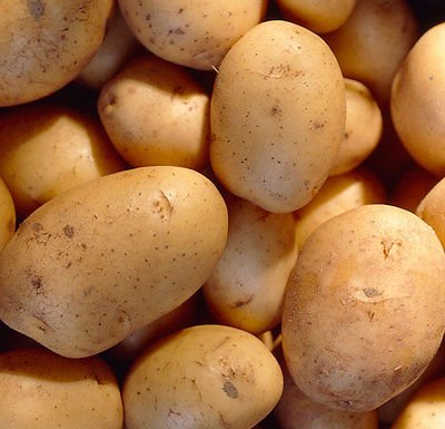 SEED POTATOES - 1 lb. Charlotte Organic Grown Non GMO Virus & Chemical Free Ready for Spring Planting by Jack's Back 40