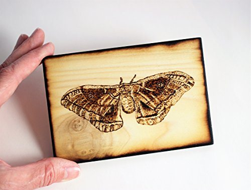 Wood Burned Polyphemus Moth Pyrography Small Woodburned Nature Insect Picture by Hendywood (Image #3)