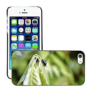 GoGoMobile Slim Protector Hard Shell Cover Case // M00123469 Beetle Insect Black Leaf Green // Apple iPhone 5 5S 5G