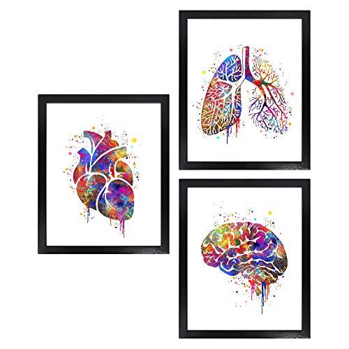 Dignovel Studios Unframed (Set of 3) 8X10 Human Anatomy Watercolor Art Print Set Heart Lung Brain Wall Prints dnc23