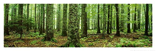 Rain Forest Green Trees, Panorama Art Poster Print Print, Photography