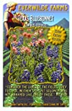 Everwilde Farms - Texas Bluebonnet Native Wildflower Seeds - Jumbo Seed Packet (50)