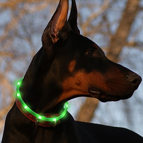 Led Dog Collar Usb Rechargeable Glowing Pet Safety Collars Water Resistant Light Up Improved Dog Visibility   Safety Adjustable Flashing Collar For Dogs 6 Stylish Colors By Bseen  Green
