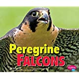 Peregrine Falcons (Birds of Prey)