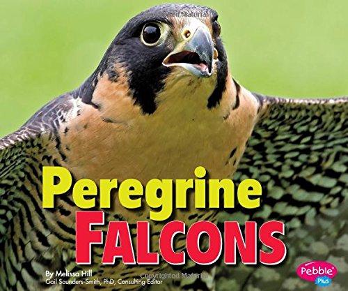 Peregrine Falcon Costume (Peregrine Falcons (Birds of Prey))