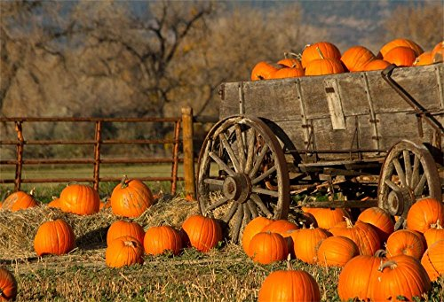 OFILA Autumn Backdrop 7x5ft Harvest Season Pumpkins Straw Wagon Wheel Rustic Landscape Country Life Fall Barn Photos Halloween Background Thanksgiving Day Party Kids Shoots Video Studio -