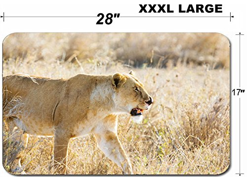 Liili Large Table Mat Non-Slip Natural Rubber Desk Pads IMAGE ID: 24709525 Close up of lioness with a nose injury in Serengeti Photo from Tanzania Africa ()