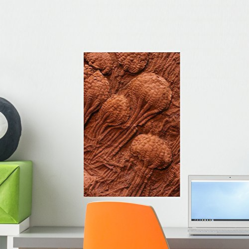 Crinoid Fossils Wall Mural by Wallmonkeys Peel and Stick Graphic (18 in H x 12 in W) WM123327