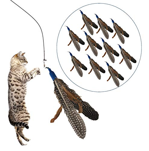 Prairie Horse Supply Long Lasting Premium Replacement Refill Feathers (Pack of 12) for Da Bird GoCat Toy Interactive Play for Cats and Kittens All Natural Genuine Guinea Feathers