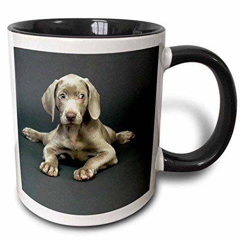 3dRose Dogs Weimaraner Two Tone mug 1094 4