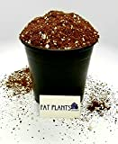 Fat Plants San Diego Succulent Soil Gallon