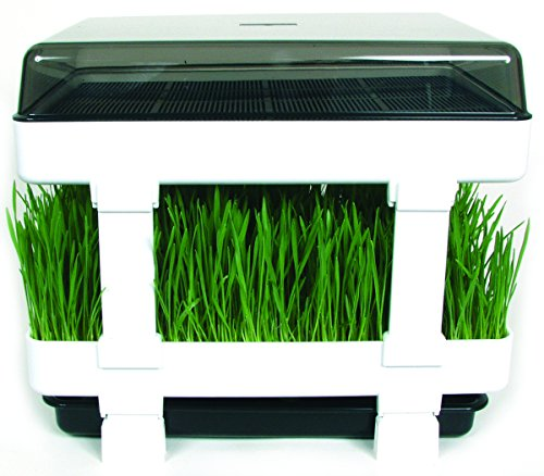 Healthy Sprouter - Wheatgrass Grower, Grow Your Own Sprouts and Micro-Greens Too! No Green Thumb Needed! (Micro Plant Grower compare prices)