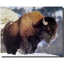 American Bison Yellowstone National Park Buffalo Wildlife Animal Wall Decor Art Print Poster (16x20)