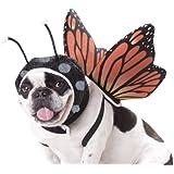 Animal Planet PET20101 Butterfly Dog Costume, Medium