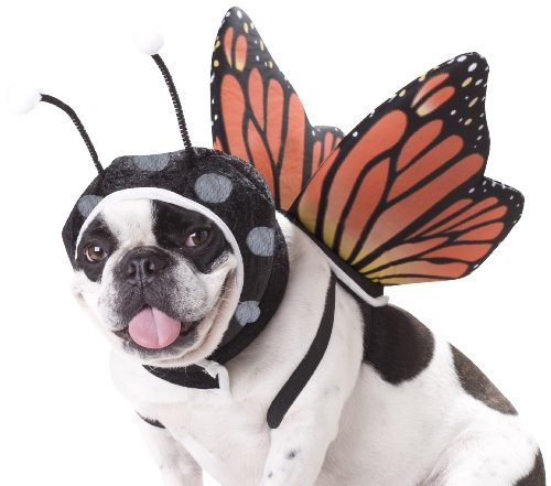 Animal Planet PET20101 Butterfly Dog Costume, Medium for $<!--$9.99-->