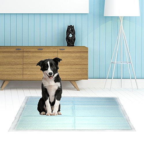 Pouty Pets 100 Puppy Pads - Disposable & Absorbent Training Pad Dogs - Leak-Proof, Tear Resistant, Odor-Eliminating & Anti-Bacterial Potty Pads Pet Attractant - Absorbs Dog Pee Quickly by Pouty Pets (Image #6)
