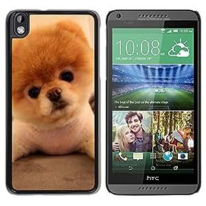 PC/Aluminum Funda Carcasa protectora para HTC DESIRE 816 Pomeranian Puppy Golden Brown Dog / JUSTGO PHONE PROTECTOR