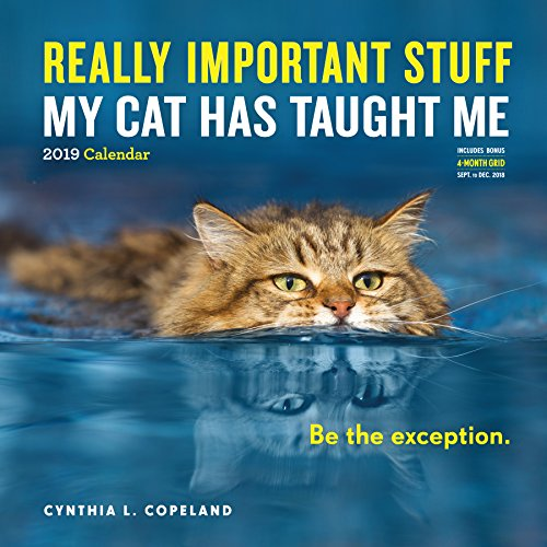 Really Important Stuff My Cat Has Taught Me Wall Calendar 2019