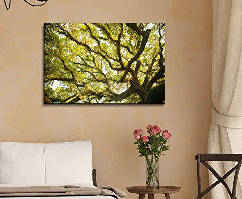 Ancient Banyan Tree Nature Beauty Wall Decor