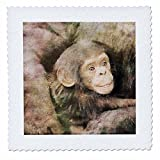 3dRose Andrea Haase Animals Illustration - Chimpanzee Mother With Child Watercolor Illustration - 20x20 inch quilt square (qs_268157_8)