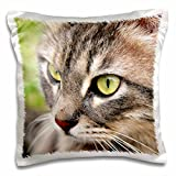 Taiche - Photography - Tabby Cats - Long Haired Tabby Cat - animal, moggie, tabbies, tabby cat, cat, cats, cute - 16x16 inch Pillow Case (pc_46676_1)