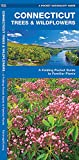 Connecticut Trees & Wildflowers: A Folding Pocket Guide to Familiar Plants (A Pocket Naturalist Guide)