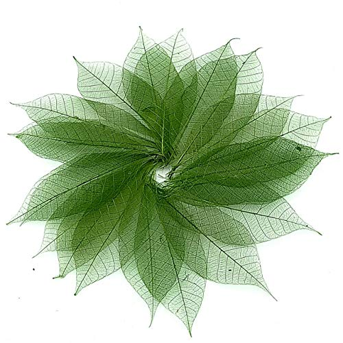NAVA CHIANGMAI Rubber Tree Leaves - Pack of 100 Skeleton Leaves Decorative DIY Craft, Artificial Leaves Craft Card Scrapbook DIY Handmade Embellishment Decoration Art (Green) by NAVA CHIANGMAI FLOWERS