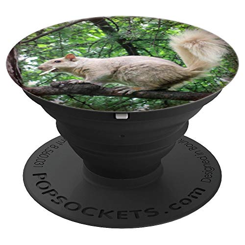 - Playful Tree Squirrel With Cracker Cute Animal Nature - PopSockets Grip and Stand for Phones and Tablets
