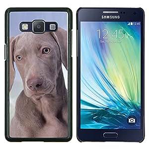 Weimaraner Vizsla Pharaoh Hound- Metal de aluminio y de plástico duro Caja del teléfono - Negro - Samsung Galaxy A5 / SM-A500