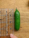 Cornaments Brand PICKLE/CUCUMBER Vegetable Decoration MAKES A PERFECT GIFT! Use as an Ornament, Inspiration, Cubicle Knickknack, Kitchen Decor, and MORE. Collect All 12. BUY NOW!