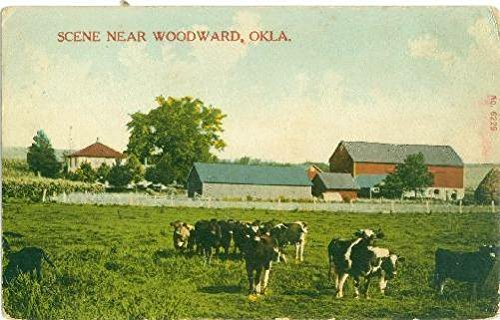 (Postcard Scene Near Woodward Oklahoma Farm with Cattle Ships from)