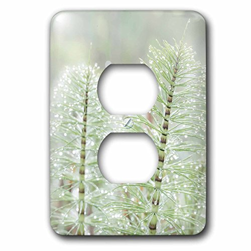 3dRose Danita Delimont - Botanical - USA, Washington State, Seabeck. Dewdrops on horsetail - Light Switch Covers - 2 plug outlet cover (lsp_260438_6)