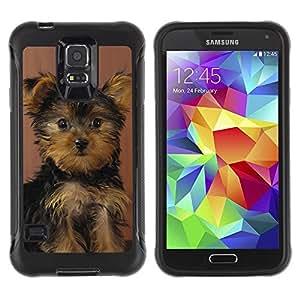 LASTONE PHONE CASE / Suave Silicona Caso Carcasa de Caucho Funda para Samsung Galaxy S5 SM-G900 / Yorkshire Terrier Puppy Surprised Dog