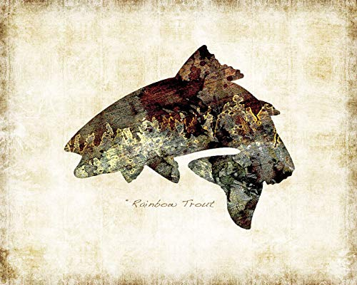 - Rainbow Trout Freshwater Fish Watercolor Art Print by Dan Morris