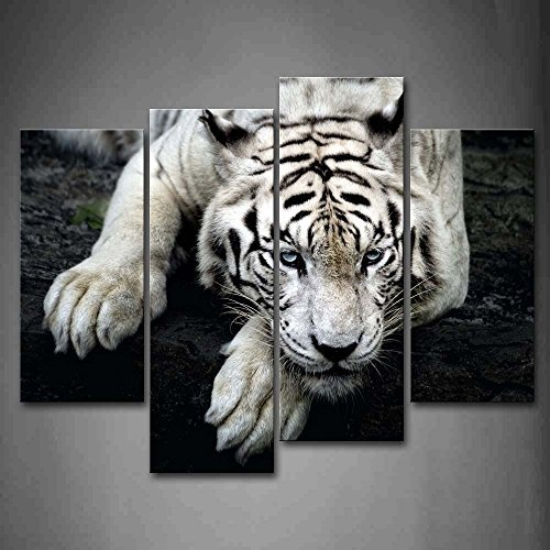 Black And White White Tiger Lie On Rock Wall Art Painting Pictures Print On Canvas Animal The Picture For Home Modern Decoration