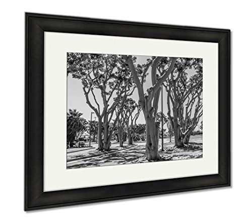 Ashley Framed Prints Coral Trees Lining A Street At Embarcadero Park South In San Diego California, Office/Home/Kitchen Decor, Black/White, 30x35 (frame size), Black Frame, - Coral Promenade Springs The