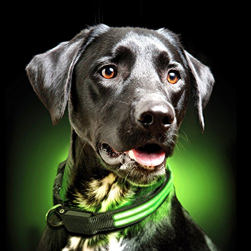 Ultimate LED Dog Collar - USB Rechargeable, cable included, 5 awesome colors. Ultra Bright, Durable, Made to last. Make your dog more visible at night (Small, -
