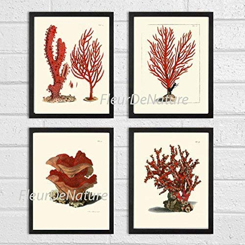 Coral Set of 4 Prints Antique Beautiful Red Corals Sea Ocean Marine Nature Home Room Decor Wall Art Unframed