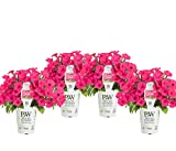Proven Winners SUPPRW4017524 Petunia Live Plant, Pink