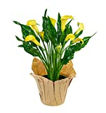 #4: KaBloom Live Plant Collection: 15'' Yellow Calla Lily Plant in a 6'' Kraft Covered Pot