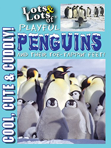 Lots and Lots of Playful Penguins - Cool, Cute and Cuddly Penguins Penguins