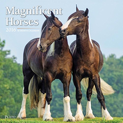 Magnificent Horses - 2016 Calendar 12 x 12in