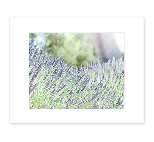 A Florist Cottage - Rustic Wall Art Flowers, Purple Floral Lavender Decor, Farmhouse Country Cottage Picture, Wild Botanical Photography, 8x10 Matted Photographic Print, (fits 11x14 frame) 'Fields of Lavender'