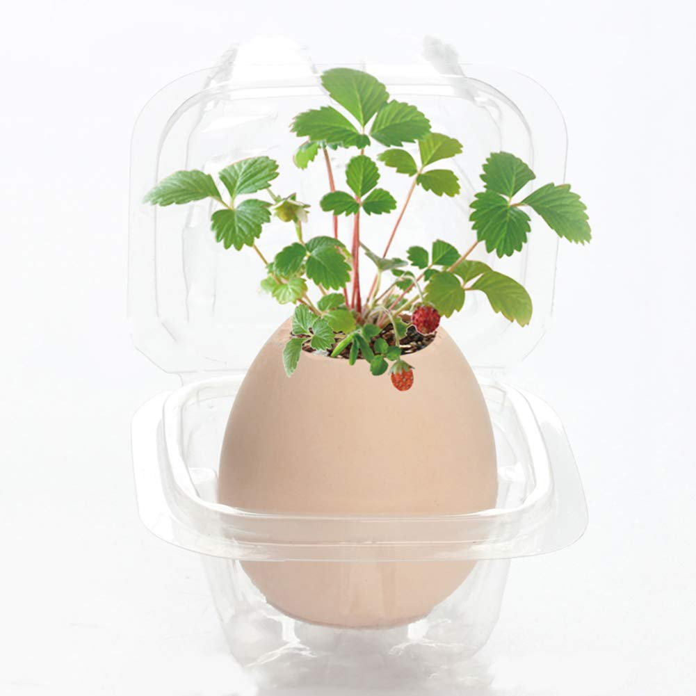 little finger Cute Lucky Egg Shaped Potted Plants Home Garden Plant Desktop Bonsai Decor Mint