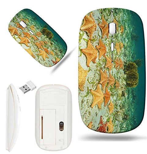 Cluster Starfish - Luxlady Wireless Mouse White Base Travel 2.4G Wireless Mice with USB Receiver, 1000 DPI for notebook, pc, laptop, macdesign IMAGE ID: 35468476 Cluster of starfish Oreaster reticulatus underwater on th