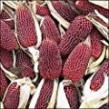 150 Red STRAWBERRY POPCORN CORN Zea Mays Vegetable Seeds