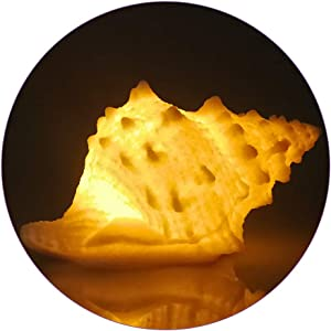 Portable Conch Shell Beach Themed Night Light w Timer for Kids Adults Bedroom Nightstand Lamp Nautical Lighting Battery Operated, Warm White