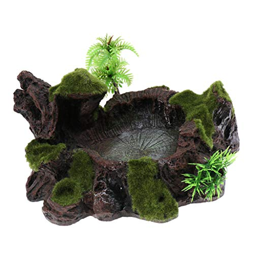 - Baosity Plant Moss Decor Anqique Rock Style Water Bowl Food Dish Terrarium Habitat Decor Tarantula Insect Worm Reptile Lizard Gecko Turtle