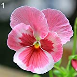 Wintefei 100Pcs Multicolor Beautiful Pansy Seeds Bonsai Plant Flower Home Garden Decor - Pink